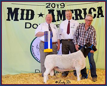 N Amp K Ranches Breeders Of Quality Livestock Eldorado Tx